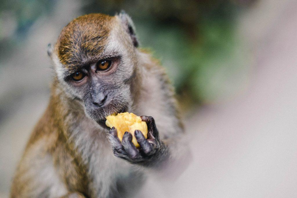 Politica e Ascolto Consapevole: generazione cannibale?